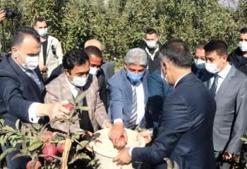 Ahlat'taki elma yetiştiricilerine destek