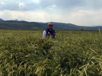 Sertifikalı tohumda bir yılda yüzde 40'lık artış